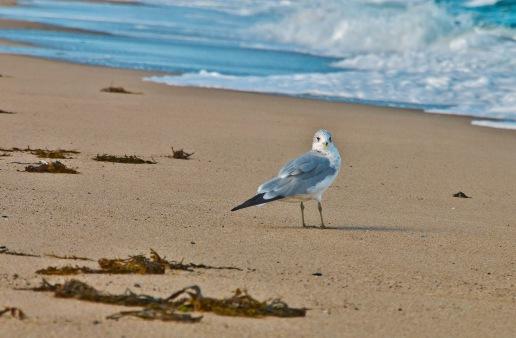 My beach company.